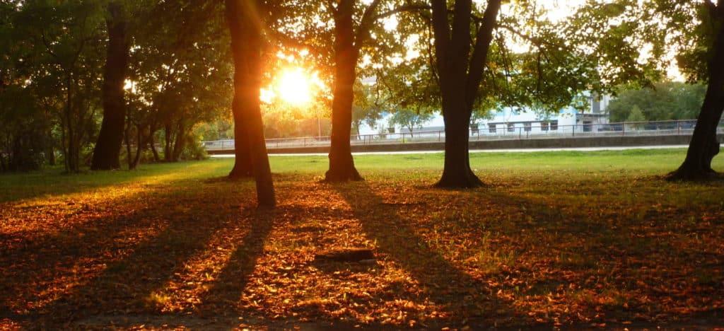 zapad slnka v parku